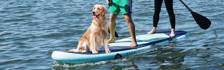 Paddle Boarding With Your Dog: The Ultimate Guide 5