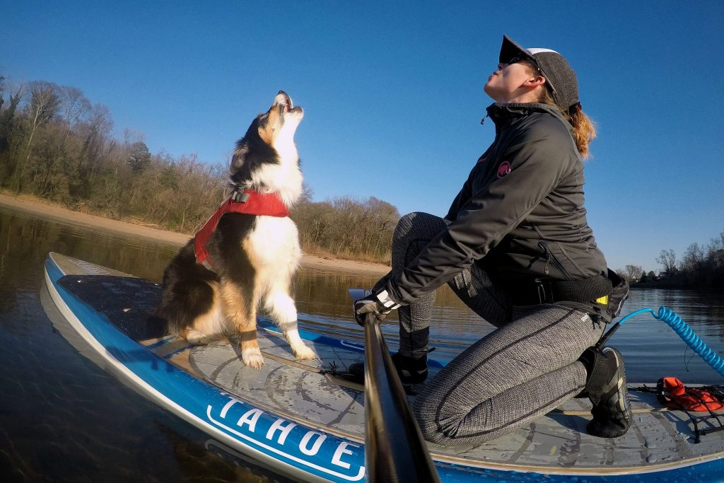 Paddle Boarding With Your Dog: The Ultimate Guide 4
