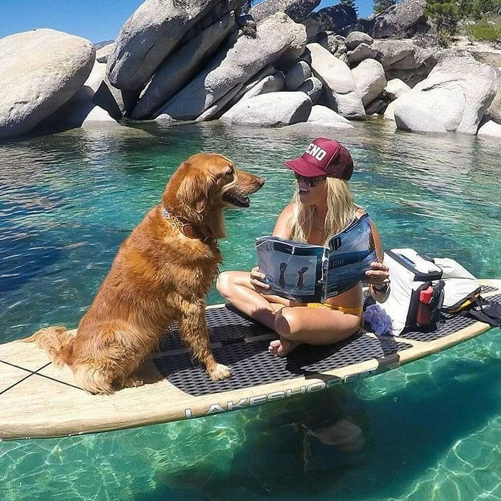 Paddle Boarding With Your Dog: The Ultimate Guide 1