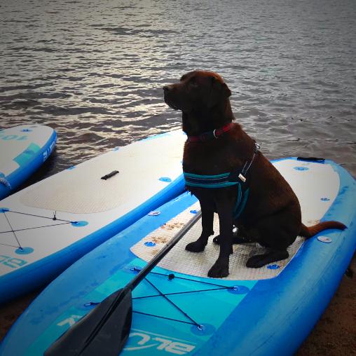 Bluefin-Voyage-Dog