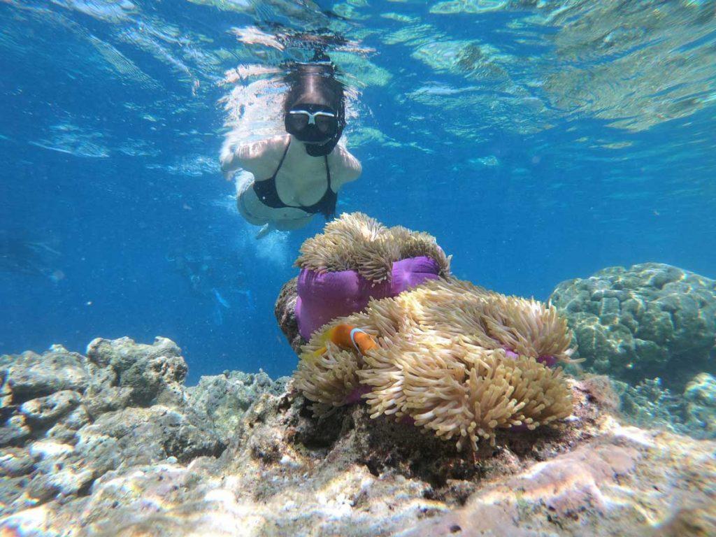 Finding Nemo Snorkel Mask