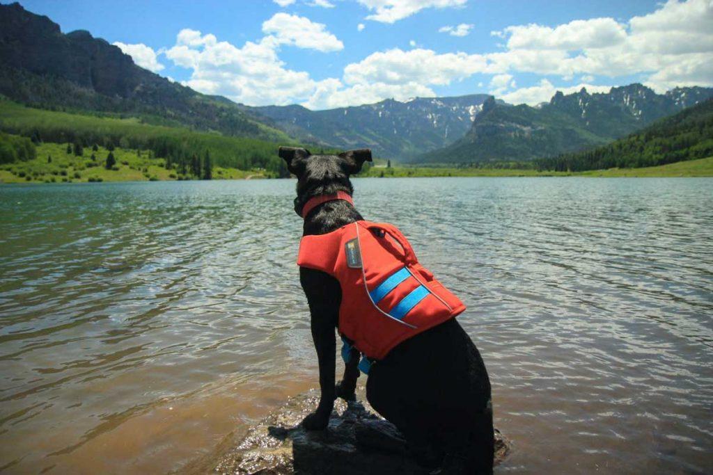 Dog life jacket adventures
