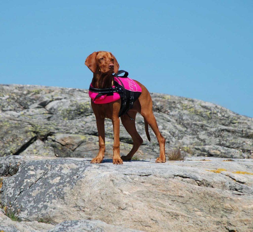 Dog life jacket pink