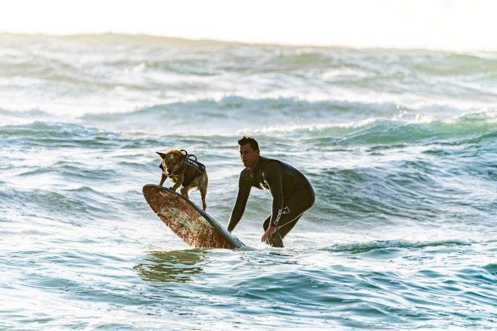 Dog life jacket surfing