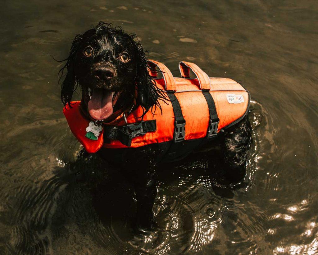 Dog life jacket water