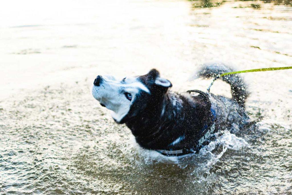 Zwemvest-Hond-Zwemmen