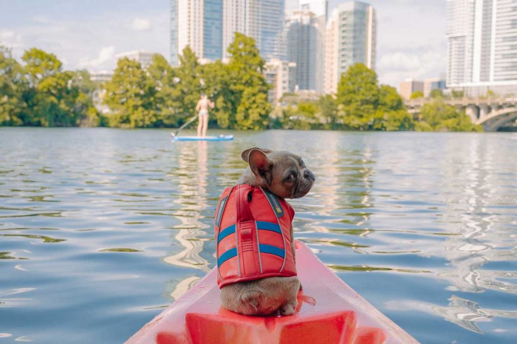 Dog life jacket boat